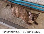 cat on street with feline... | Shutterstock . vector #1040412322