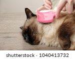 woman combing feline beautuful... | Shutterstock . vector #1040413732