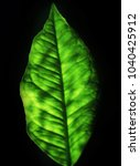 green leaf on the gleam | Shutterstock . vector #1040425912