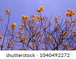 low angle view of yellow... | Shutterstock . vector #1040492272