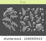vector hand drawn medicinal ... | Shutterstock .eps vector #1040505415