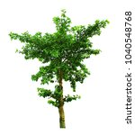 tree isolated on a white... | Shutterstock . vector #1040548768