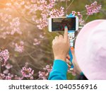 pink sakura flowers  beautiful... | Shutterstock . vector #1040556916