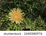 thistle in the pyrenees | Shutterstock . vector #1040580976
