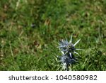 thistle in the pyrenees | Shutterstock . vector #1040580982