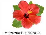 Blossoming Red Flower Of...