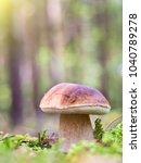 white mushroom in moss in... | Shutterstock . vector #1040789278