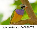 a colorful green purple yellow...   Shutterstock . vector #1040870572