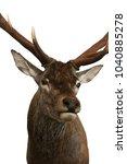 deer head hunting trophy...   Shutterstock . vector #1040885278