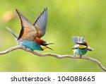 European Bee Eater  Merops...