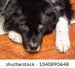close up portrait of black dog... | Shutterstock . vector #1040890648