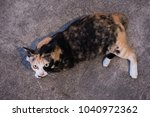 cat on street with feline... | Shutterstock . vector #1040972362