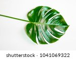 green leaves monstera on white... | Shutterstock . vector #1041069322