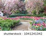 Tulips Time In Corbet Garden