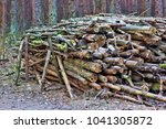 old pine tree logs and branches ... | Shutterstock . vector #1041305872