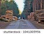 A road in the middle of the forest with  cutted and stacked pine trees on piles on the  roadside. Forestry work in European Union.