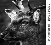 portrait of a deer  | Shutterstock . vector #1041314332
