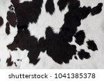 Cow Skin Fur Texture Close Up...