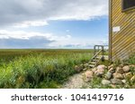 endless green reeds on the... | Shutterstock . vector #1041419716