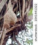 wild thai avian straw weaver...   Shutterstock . vector #1041441322