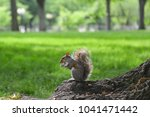 a squirrel eats nut in a park... | Shutterstock . vector #1041471442