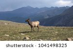a female elk with long horns on ... | Shutterstock . vector #1041498325