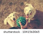 woman and dogs playing in the... | Shutterstock . vector #1041563065