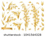 oat plants  rolled oats. 3d... | Shutterstock .eps vector #1041564328