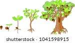 oak life cycle. plant growin... | Shutterstock .eps vector #1041598915