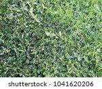 outdoor green grass  looks so...   Shutterstock . vector #1041620206