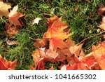maple leaf. maple tree with... | Shutterstock . vector #1041665302