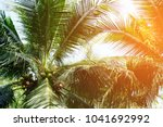 tropical coconut palm leaves... | Shutterstock . vector #1041692992