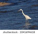 a great egret  ardea alba ... | Shutterstock . vector #1041694618
