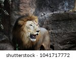 Lion Standing On A Rock. Male...