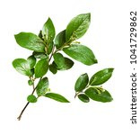 twigs with green leaves and... | Shutterstock . vector #1041729862