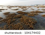 corals in shallow waters during ... | Shutterstock . vector #104174432