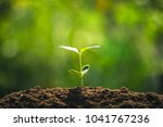 young tree plant a tree... | Shutterstock . vector #1041767236