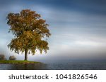 lonely tree at a lake | Shutterstock . vector #1041826546