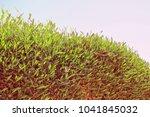 beautiful seashore vacation on... | Shutterstock . vector #1041845032