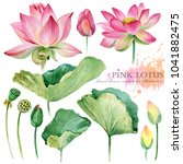 Lotus Flowers And Leaves Hand...