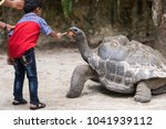 Stock photo kid or children feeding the giant tortoise giant tortoise eating given fruits by the kids 1041939112