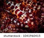 underwater macro life | Shutterstock . vector #1041960415