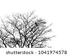 branches on a white background. | Shutterstock . vector #1041974578