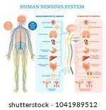 human nervous system medical... | Shutterstock .eps vector #1041989512
