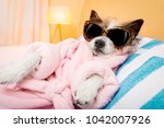 cool funny  poodle dog resting... | Shutterstock . vector #1042007926