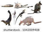 collection of different wild... | Shutterstock . vector #1042009408