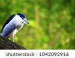 Close Up  Beautiful Bird
