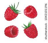 set of raspberries  watercolor...   Shutterstock . vector #1042101196