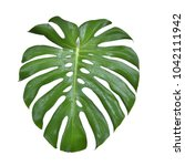 monstera leave texture tropical ...   Shutterstock . vector #1042111942