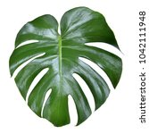 monstera leave texture tropical ... | Shutterstock . vector #1042111948